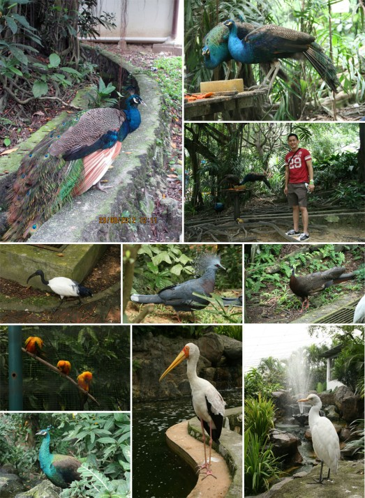 119 BIRD EVERYWHERE