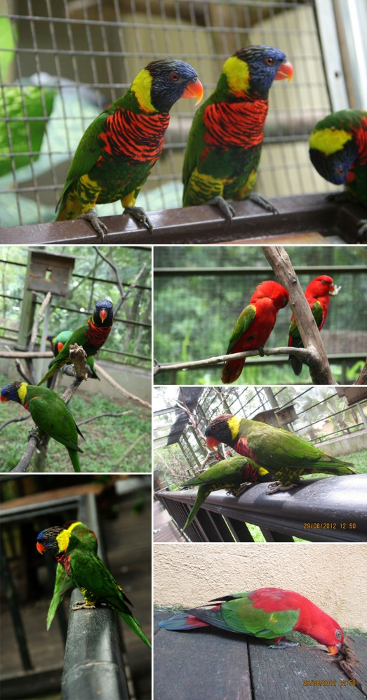 122 COLORFUL PARROTS