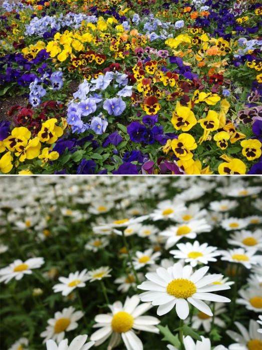 247 FLOWERS