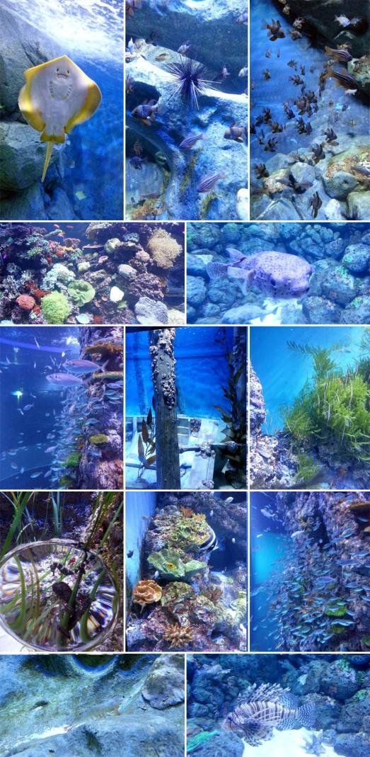 372 OCEAN LIFE