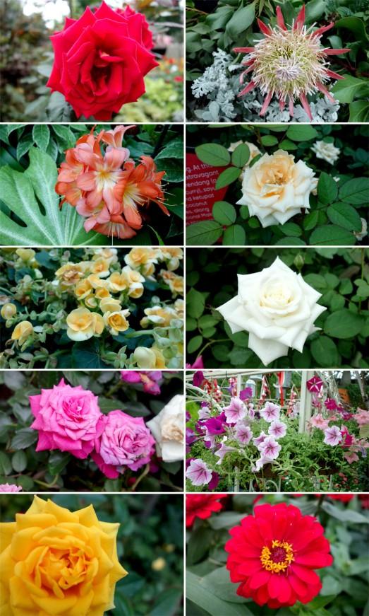 415 FLOWERS