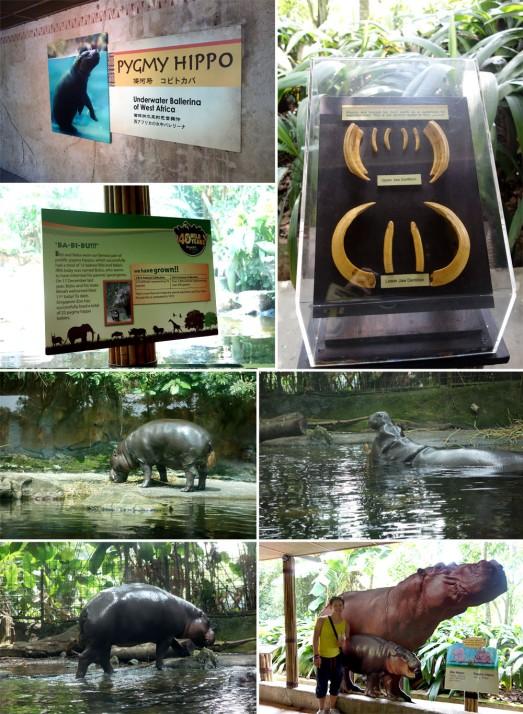 549 HIPPO