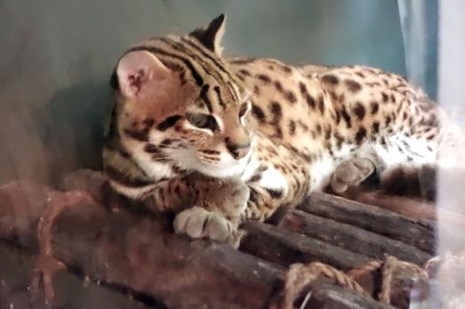 568 CUTE CAT